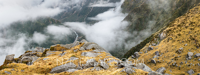 Moody scene of alpine high country with Cook River in background, Westland Tai Poutini National Park, UNESCO World Heritage Area, West Coast, New Zealand, NZ