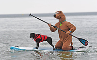 BNPS.co.uk (01202 558833)<br /> Pic: ZacharyCulpin/BNPS<br /> <br /> Pictured: A surfing Scooby takes part in a race with his pooch <br /> <br /> Putting their best paw forward hoping to ride the wave of success - Competitors and their dogs take part in the annual Dog Surfing championships.<br /> <br /> The event known as The 'dogmasters' took place today on Bournemouth beach in front of packed crowd, it's the country's only dog surfing and paddleboard championship.