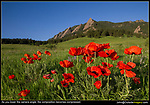 Chautauqua. The wildflowers are at their peak from mid-may to mid-June. When Boulder receives lots of spring rain, the flowers and photographers benefit. Boulder tours.