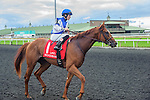 Saratoga Dreamer(1) with Jockey Emma-Jayne Wilson aboard after completing the Summer Stakes at Woodbine Race Course in Toronto, Canada on September 13, 2014 with Jockey Patrick Husbands aboard.