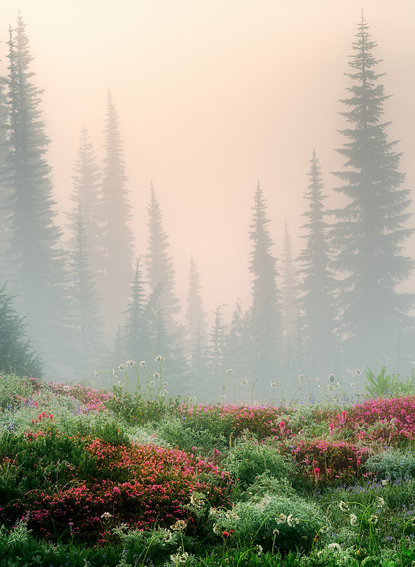Field of various wildflowers,trees and fog. Mt. Rainier National Park, Washington