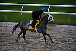 October 28, 2015:  Frosted, trained by Kiaran P. McLaughlin and owned by Godolphin Racing LLC, exercises in preparation for the Breeders' Cup Classic at Keeneland Race Track in Lexington, Kentucky on October 28, 2015.  John Voorhees/ESW/CSM