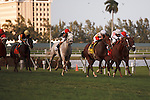 Data Link with Javier Castellano up wins the Canadian Turf (G3T) at Gulfstream Park. Hallandale Beach Florida. 02-23-2013