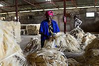 TANZANIA Tanga, Usambara Mountains, Sisal farming and industry, D.D. Ruhinda & Company Ltd., Mkumbara Sisal estate, further processing of sisal fibres / TANSANIA Tanga, Sisal Industrie, D.D. Ruhinda & Company Ltd., Mkumbara Sisal estate, Weiterverabeitung der getrockneten Sisalfaser