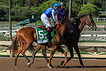 ARCADIA, CA. SEPTEMEBER 29:   #5 Der Lu, ridden by Drayden Van Dyke, in the post parade of the Chandelier Stakes (Grade l) on September 29, 2018, at Santa Anita Park in Arcadia, CA. (Photo by Casey Phillips/Eclipse Sportswire/CSM)