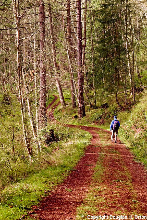 Trail down from Turtleback Mountain preserve on Orcas Island, newly purchased and opened to the public by the San Juan Preservation Trust.