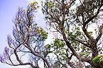 Image Ref: CA940<br /> Location: Bushrangers Bay Track<br /> Date of Shot: 07.09.19
