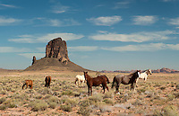 Navajo horses, Monument Valley, Utah.