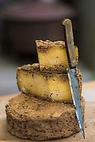 France, Morbihan (56), Sarzeau: Ferme fromagère de Sucinio, Gurvan Bourvellec y transforme le lait de petites vaches bretonnes pie noire,  Production du fromage: Tome de Rhuys , Gurvan Bourvellec dans sa cave d'affinage // France, Morbihan (56), Sarzeau Suscinio Farm cheese, Gurvan Bourvellec processing the milk of small black cows Breton pie, cheese Production: Volume Rhuys, Gurvan Bourvellec in its maturing cellar