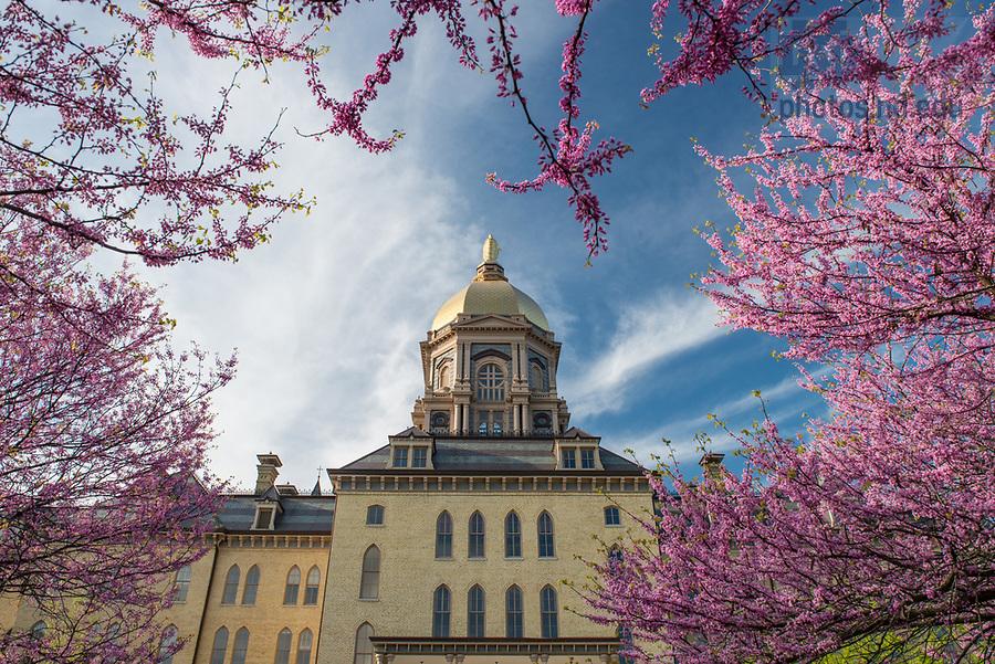 April 25, 2017; Main Building, spring 2017.  (Photo by Barbara Johnston/University of Notre Dame)