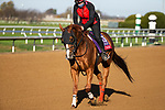 November 3, 2020: Whitmore, trained by trainer Ron Moquett, exercises in preparation for the Breeders' Cup Sprint at Keeneland Racetrack in Lexington, Kentucky on November 3, 2020. Jon Durr/Eclipse Sportswire/Breeders Cup