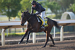 SHA TIN,HONG KONG-DECEMBER 08 : The Right Man,trained by Didier Guillemin,exercises in preparation for the Hong Kong Sprint at Sha Tin Racecourse on December 8,2017 in Sha Tin,New Territories,Hong Kong (Photo by Kaz Ishida/Eclipse Sportswire/Getty Images)