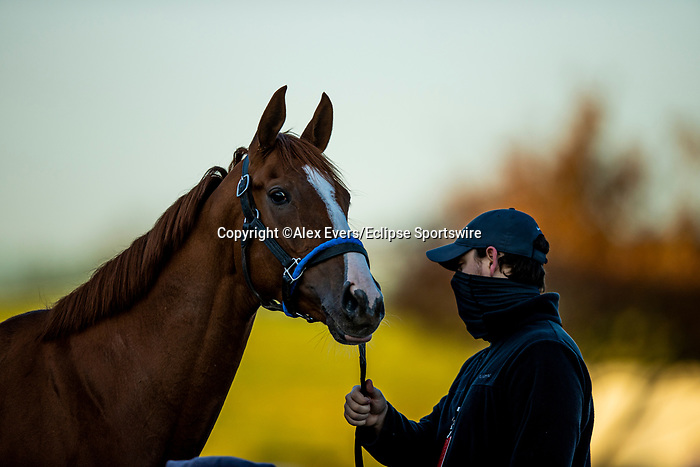 November 3, 2020: Sally'S Curlin, trained by trainer Dale L. Romans, exercises in preparation for the Breeders' Cup Filly & Mare Sprint at Keeneland Racetrack in Lexington, Kentucky on November 3, 2020. Alex Evers/Eclipse Sportswire/Breeders Cup