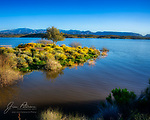Lone Tree at Lake Pleasant.  A springtime sunrise illuminates the brittlebush blossoms under this solitary desert hardwood.  Northwest of Phoenix, Lake Pleasant attracts campers, swimmers, and boaters year round.<br /> <br /> Image ©2020 James D. Peterson