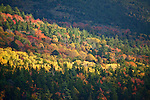 Deciduous and pine trees are illuminated in autumn on the western flanks of  Cadillac Mountain on Mount Desert Island, Acadia National Park, Maine, USA