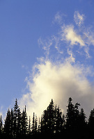 Trees silhouetted against clouds in blue sky, Paradise, Mount Rainier National Park, Washington