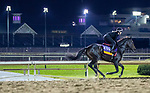 October 31, 2018 : Champagne Problems, trained by Ian R. Wilkes, exercises in preparation for the Breeders' Cup Distaff at Churchill Downs on October 31, 2018 in Louisville, Kentucky. Carolyn Simancik/Eclipse Sportswire/CSM