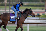 OCT 26 2014:Souper Colossal, trained by Eddie Plesa, exercises in preparation for the Sentient Jet Breeders' Cup Juvenile at Santa Anita Race Course in Arcadia, California on October 26, 2014. Kazushi Ishida/ESW/CSM