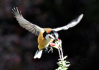 Australian Birds  /  Animals