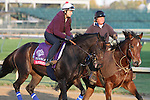 Harmonious, trained by John Shirreffs and to be ridden by Joel Rosario , exercises in preparation for the 2011 Breeders' Cup at Churchill Downs on October 31, 2011.