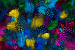 Feathers Multicolored