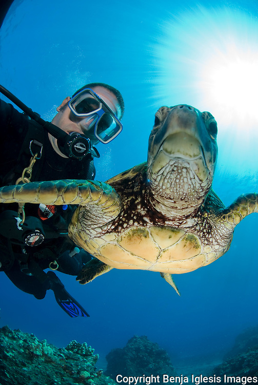 Diver swimming over turtle at the st Anthonys wreck Maui hawaii.