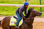 LOUISVILLE,KNY - MAY 03: Royal Mo, Morning works for Kentucky Derby & Kentucky Oaks at Churchill Downs, Louisville, Kentucky. (Photo by Sue Kawczynski/Eclipse Sportswire/Getty Images)