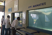 Dominikanische Republik, Manati (Seekuh) im Acuario Nacional in Santo Domingo