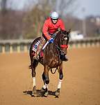 Venetian Harbor, trained by Richard Baltas, exercises in preparation for the Breeders' Cup Filly & Mare Sprint at Keeneland 11.03.20.