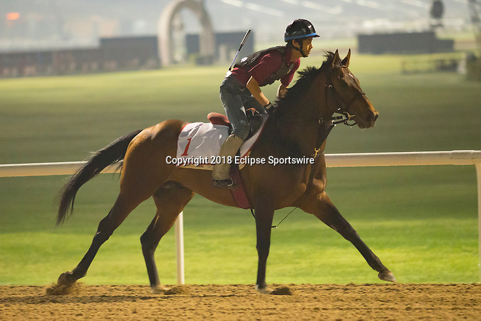 DUBAI,UNITED ARAB EMIRATES-MARCH 30: Awardee,trained by Mikio Matsunaga,exercises in preparation for the Dubai World Cup at Meydan Racecourse on March 30,2018 in Dubai,United Arab Emirates (Photo by Kaz Ishida/Eclipse Sportswire/Getty Images)