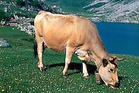 Spanien, Asturien, Picos de Europa, Enol-See, Kuh