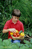 HS18-162z  Boy harvesting vegetables in garden - tomato, cucumber, carrot, squash