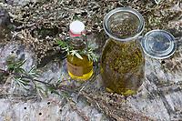 Beifuss-Öl, Beifuß-Öl, Beifussöl, Beifußöl, Gewöhnlicher Beifuß, Beifuss, Artemisia vulgaris, Mugwort, common wormwood, oil, L'Armoise commune, Armoise citronnelle
