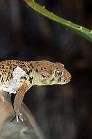 A Gecko in Beijing Zoo.