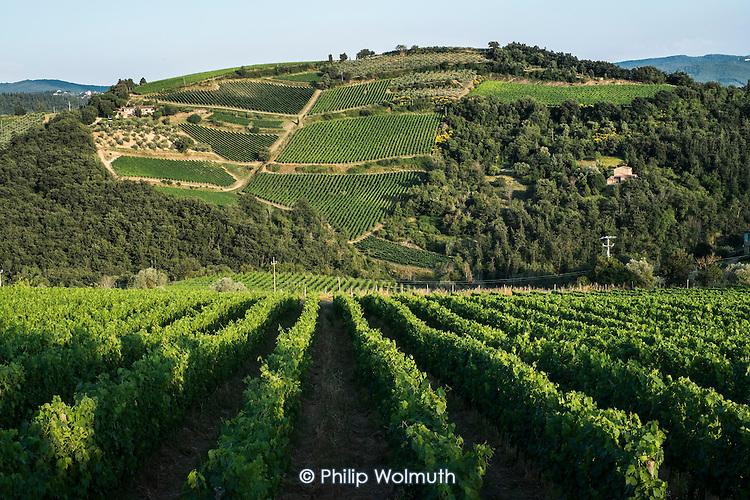 Vineyards in Chianti region, Tuscany, Italy