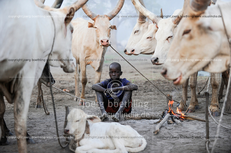 SOUTH SUDAN  Bahr al Ghazal region , Lakes State, young boy in cattle camp near Rumbek / SUED-SUDAN  Bahr el Ghazal region , Lakes State, Dinka Junge mit Zeburindern im cattle camp