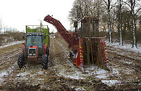 Harvesting willow in the winter for burning in a power station. Yorkshire