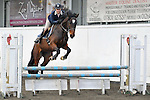 18/03/2014 - Class 1 - KBIS Insurance british novice - Last BS show at Norton heath equestrian centr