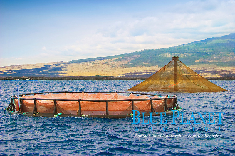 floating fish pen and 3,000-cubic-meter submersible fish pen installed in open ocean just off Kona Coast to raise Kona Kampachi, Hawaiian yellowtail, aka almaco jack or kahala, Seriola rivoliana, note - the submersible fish pen in raised postion to feed the fish inside, Big Island, Hawaii, Pacific Ocean