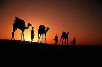 A camel caravan in silhouette at sunset on the Sam sand dunes. Rajasthan, India..