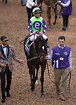 DEL MAR, CA - NOVEMBER 03: Rushing Fall #11, ridden by Javier Castellano, walks in the paddock prior to winning the Breeders' Cup Juvenile Fillies Turf on Day 1 of the 2017 Breeders' Cup World Championships at Del Mar Thoroughbred Club on November 3, 2017 in Del Mar, California. (Photo by Kazushi Ishida/Eclipse Sportswire/Breeders Cup)