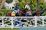 ARCADIA, CA - OCT 31: Effinex, owned by Tri-Bone Stables, Inc. and trained by James A. Jerkens, walks through the paddock on the way to the track to exercise in preparation for the Breeders' Cup Classic at Santa Anita Park on October 31, 2016 in Arcadia, California. (Photo by Zoe Metz/Eclipse Sportswire/Breeders Cup)