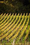Italy, Alto Adige - Trentino (South Tyrol), Eppan: famous wine growing region at the strada del vino | Italien, Suedtirol, Eppan suedlich von Bozen, Weinberge an der Weinstrasse