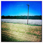 Cotton field in Oxford, Miss. on October 9, 2011..Photo taken with an IPhone 4 using Hipstamatic app. .©2011 Bruce Newman