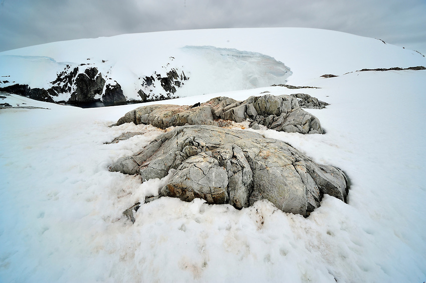 Future Penguin Project Home - Petermann Island