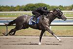 #81Fasig-Tipton Florida Sale,Under Tack Show. Palm Meadows Florida 03-23-2012 Arron Haggart/Eclipse Sportswire.