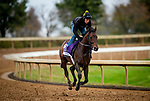 October 30, 2020: True Timber, trained by trainer Jack Sisterson, exercises in preparation for the Breeders' Cup Dirt Mile at Keeneland Racetrack in Lexington, Kentucky on October 30, 2020. Alex Evers/Eclipse Sportswire/Breeders Cup