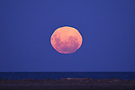 Super Moon on 9 February 2020. Copyright image Chris Symes/www.shuttersport.co.nz. Contact info@shuttersport.co.nz for use of image.