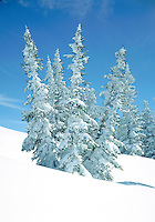Snow covered evergreens in Winter paradise on Mount Werner, near Steamboat Springs, Colorado
