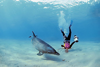 Scuba diver interacting with Wild Bottlenose Dolphin, Tursiops truncatus, Nuweiba, Egypt, Red Sea., Northern Africa